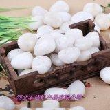 白色小石子 雨花石  庭院多肉鋪面園林石 雨花石