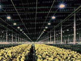 凯森led植物灯草莓菊花花卉灯大棚温室补光灯