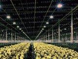 凱森led植物燈草莓菊花花卉燈大棚溫室補光燈