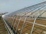 青州宜恩日光溫室大棚,日光溫室大棚廠家