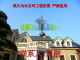 苏州羽毛枫种植基地 红羽毛枫 红枫 高杆精品鸡爪槭