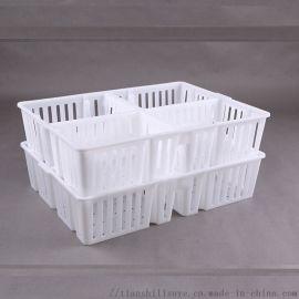 四格装鸡苗塑料筐 鸡苗运输筐 优质鸡苗箱