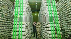 出菇架厂家袋栽菇专用出菇架食用菌钢架