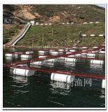 網箱養殖河蝦 網箱養殖魚苗 河裏網箱養魚