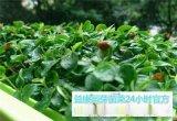 哪能够学习芽苗菜的种植方法-益康园芽苗菜