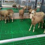 養羊塑料漏糞板 羊用保溫牀 羊用漏糞牀