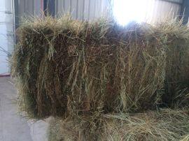 牛马羊兔子植物牧草苜蓿草,苜蓿草颗粒,苜蓿草颗粒