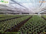 廣州花卉大棚 花卉大棚造價 農用大棚