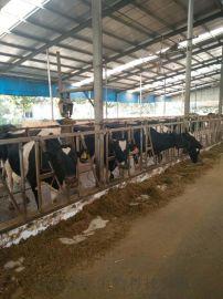 功能性微生态制剂在反刍动物养殖中的作用