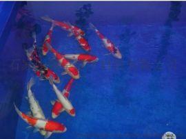 藁城渔业养殖场养防水型鱼池  环保型环氧鱼池防腐漆生产厂家