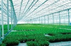 山东济宁PC阳光板,温室大棚专用防雾滴阳光板,熊大双层透明中空阳光板