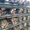 2米粗竹竿 樹木支撐杆 綠化支撐杆