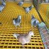 玻璃鋼鴿舍地網的連接安裝是怎麼樣問霈凱