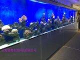 苏州鱼缸工厂承接大型玻璃鱼缸工程 会所海水鱼缸