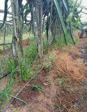 農業灌溉地埋管廠家滴灌管價格滴灌管材廠家