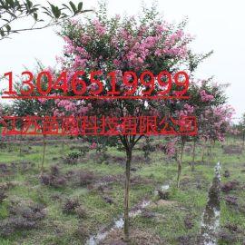 紫薇樹報價  3公分紫薇樹多少錢一棵 湖北苗木基地