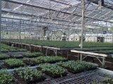 河北专业生产温室自动喷灌机厂家