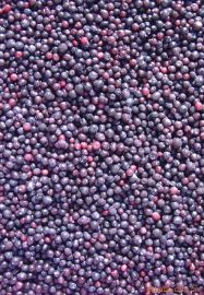 廠家直銷樂汀漿果大興安嶺冷凍野生藍莓冷凍水果酒店餐飲鮮榨