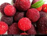 提供果蔬加工技术