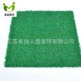 門球草全綠色高密度,門球草美創草坪