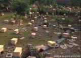 蜜蜂出售資訊蜜蜂出售蜜蜂,蜜蜂出售批蜜蜂出售廠家