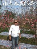 陝西膜袋紅富士蘋果價格