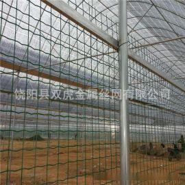 供应PVC涂塑荷兰网  绿胶皮养殖钢丝网