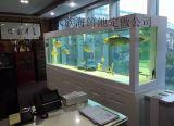 广州白云上门黄埔清洗鱼缸,广州黄埔专业消毒鱼缸公司,广州黄埔专业维护鱼缸公司