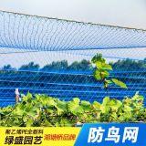 现货供应 强力单丝防鸟网防护网葡萄樱桃果园果树边网批发