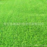 西安人造草坪丨运动场丨庭院装饰草坪