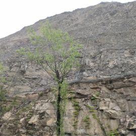 景区防护网,景区山体防护网,景区防落石网