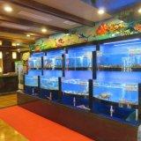 广州花都上门安装海鲜池公司 花都超市海鲜池定做