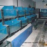 廣州白雲海鮮池公司,白雲新市哪裏定做海鮮池,白雲區黃岐海鮮玻璃魚缸上門安裝,馬務村飯店海鮮池