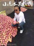 陝西紙袋紅富士蘋果價格