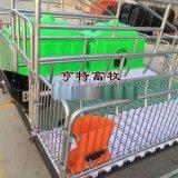 专业养猪设备母猪产床复合板猪用设备厂家报价