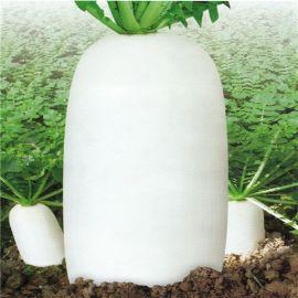 九斤王迟萝卜种子白萝卜春夏秋季播农家盆栽地栽浙长大萝卜蔬菜籽