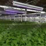 LED植物生長燈管