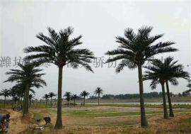 仿真椰子树厂家  品牌天骄仿真园林
