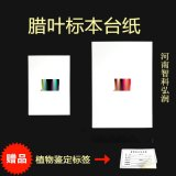 蜡叶标本台纸 植物标本保存专用台纸 河南智科 标本系列
