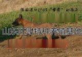 马犬价格马犬批发价格马犬养殖场