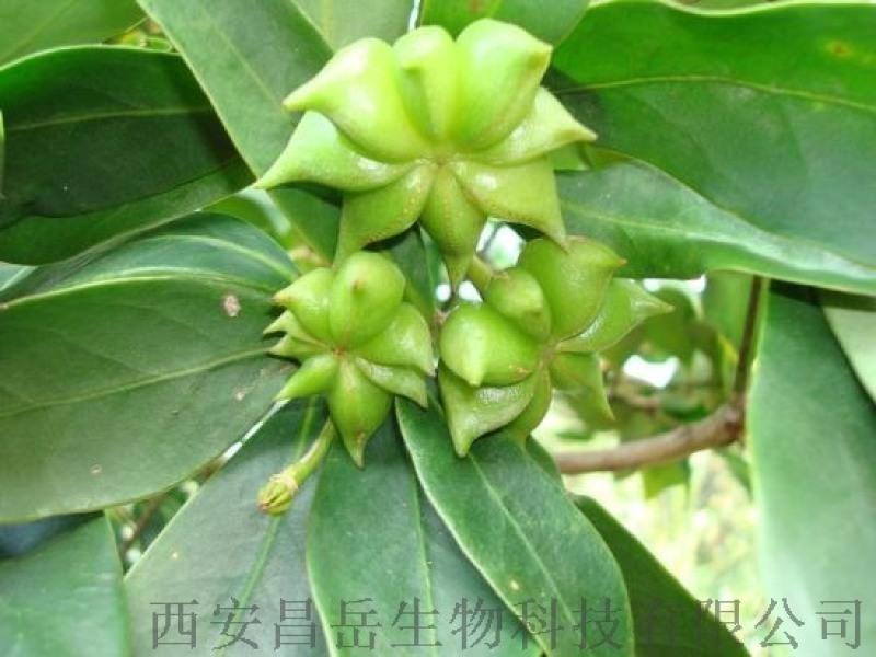 大茴香提取物 10:1生产厂家