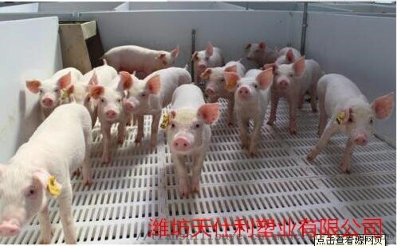 猪用漏粪板 猪用保温床 养猪场塑料漏粪板
