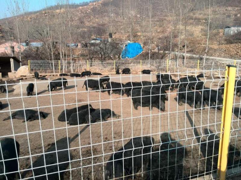 散養雞圍網,養殖圍圍欄網,現貨養殖護欄