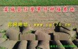 绿化草皮出售|高羊茅草坪种子批发价格|公园小区绿化草坪品种
