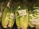 供应优质bopp食品防雾膜 批发有机蔬菜包装膜 菌菇类包装卷膜