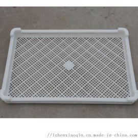 PP周转灵活塑料单冻盘子 冷冻盘子
