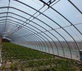 齊慶新型保溫大棚助力農業發展提高種植效益