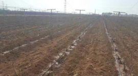 湖南省滴灌管材系统安装湖北省灌溉滴灌管生产批发