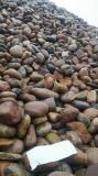 河南直銷5-8公分天然鵝卵石 變壓器用