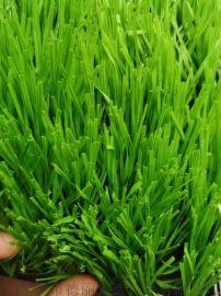 厂家直销 足球场免冲沙人造草坪 人工草坪